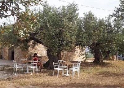 Uliveto Presso Agriturismo di Ferlito Salvatore a Selinunte